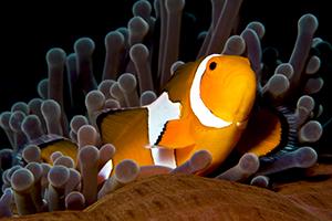 tien plaatjes van onderwaterleven